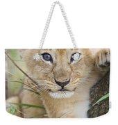African Lion Cub Kenya Weekender Tote Bag by Suzi Eszterhas