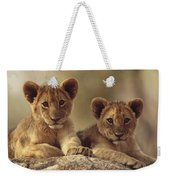 African Lion Cubs Resting On A Rock Weekender Tote Bag