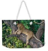 African Lion Panthera Leo On Tree, Lake Weekender Tote Bag