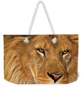 African Lion Panthera Leo Wildlife Rescue Weekender Tote Bag