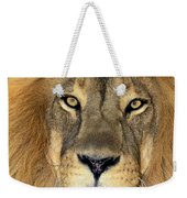 African Lion Portrait Wildlife Rescue Weekender Tote Bag