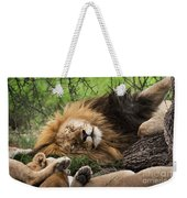 African Lion Sleeping In Serengeti Weekender Tote Bag