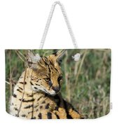 African Serval In Ngorongoro Conservation Area Weekender Tote Bag