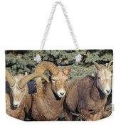 After The Rut Bighorn Sheep Weekender Tote Bag
