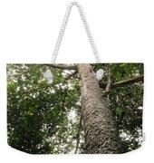 Agathis Borneensis Tree Weekender Tote Bag