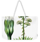 Agave Americana, Common Names Century Plant, Maguey Or American  Weekender Tote Bag