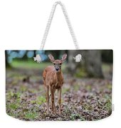 Alert Fawn Deer In Shiloh National Military Park Tennessee Weekender Tote Bag
