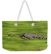 Alligator In Sun Weekender Tote Bag