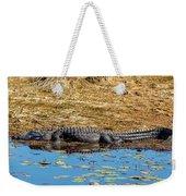 Alligator In The Sun Weekender Tote Bag