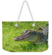 Alligator Up Close  Weekender Tote Bag by Allen Sheffield