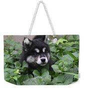 Alusky Pup Peaking Out Of Green Foliage Weekender Tote Bag