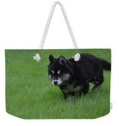 Alusky Puppy Creeping Through Green Grass Weekender Tote Bag
