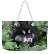 Alusky Puppy Dog Licking The Tip Of His Nose Weekender Tote Bag