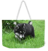 Alusky Puppy Dog Spotting A Toy To Play With Weekender Tote Bag