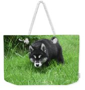 Alusky Puppy Stalking Through Tall Green Grass Weekender Tote Bag