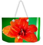 Amaryllis Contrast Orange Amaryllis Flower Appearing To Float Above A Deep Green Background Weekender Tote Bag
