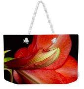 Amaryllis Flower About To Bloom Weekender Tote Bag