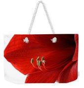 Amaryllis On White 3 Weekender Tote Bag