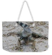 Amazing Iguana With A Striped Tail On A Beach Weekender Tote Bag