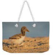 American Oystercatcher Chick Weekender Tote Bag