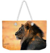 An Adult Male African Lion, Panthera Weekender Tote Bag
