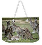 An Alert Mob Of Eastern Grey Kangaroos Weekender Tote Bag