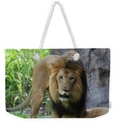 An Amazing Look At A Prowling Lion Standing In Grass Weekender Tote Bag