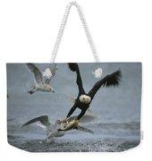 An American Bald Eagle Grabs A Fish Weekender Tote Bag