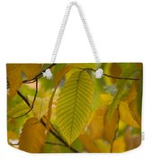 An American Chestnut Tree Castanea Weekender Tote Bag