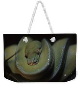 An Immature Green Tree Python Curled Weekender Tote Bag