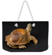 An Ornate Box Turtle With A Fiberglass Weekender Tote Bag