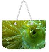 Anemone Shrimp2 Weekender Tote Bag