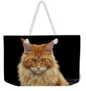 Angry Ginger Maine Coon Cat Gazing On Black Background Weekender Tote Bag
