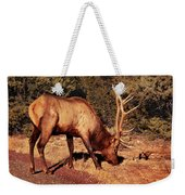 Animal - Elk -  An Elk Eating Weekender Tote Bag