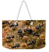 Ant Crematogaster Sp Group Weekender Tote Bag