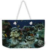 Anthias Fish, Anemonefish And Basslets Weekender Tote Bag
