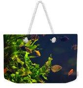 Aquarium Fish And Plants In Zoo Weekender Tote Bag