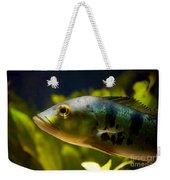 Aquarium Striped Fish Portrait Weekender Tote Bag