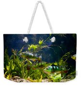 Aquarium Striped Fishes Group Weekender Tote Bag