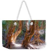 Arrayanes Grove On Trail In Arrayanes National Park Near Bariloche-argentina Weekender Tote Bag