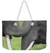 Asian Elephant Greeting Weekender Tote Bag