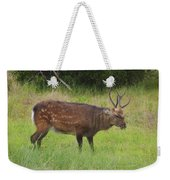 Assateague Sitka Deer Weekender Tote Bag