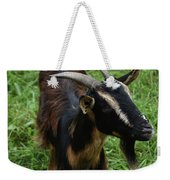 Attractive Goat Standing In A Grass Field On A Farm Weekender Tote Bag