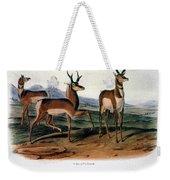 Audubon: Antelope, 1846 Weekender Tote Bag