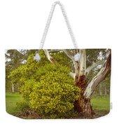 Australian Wattles Bush And Candlebark Gum Tree Weekender Tote Bag