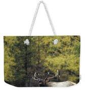 Autumn Bull Elk Bugling  Weekender Tote Bag