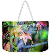 Autumn Color Changing Leaves On A Tree Branch Weekender Tote Bag