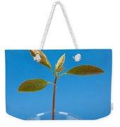 Avocado Seedling Weekender Tote Bag