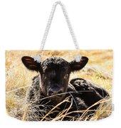 Baby Angus Calf Hideaway Weekender Tote Bag