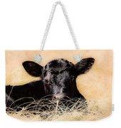 Baby Angus Calf  Weekender Tote Bag